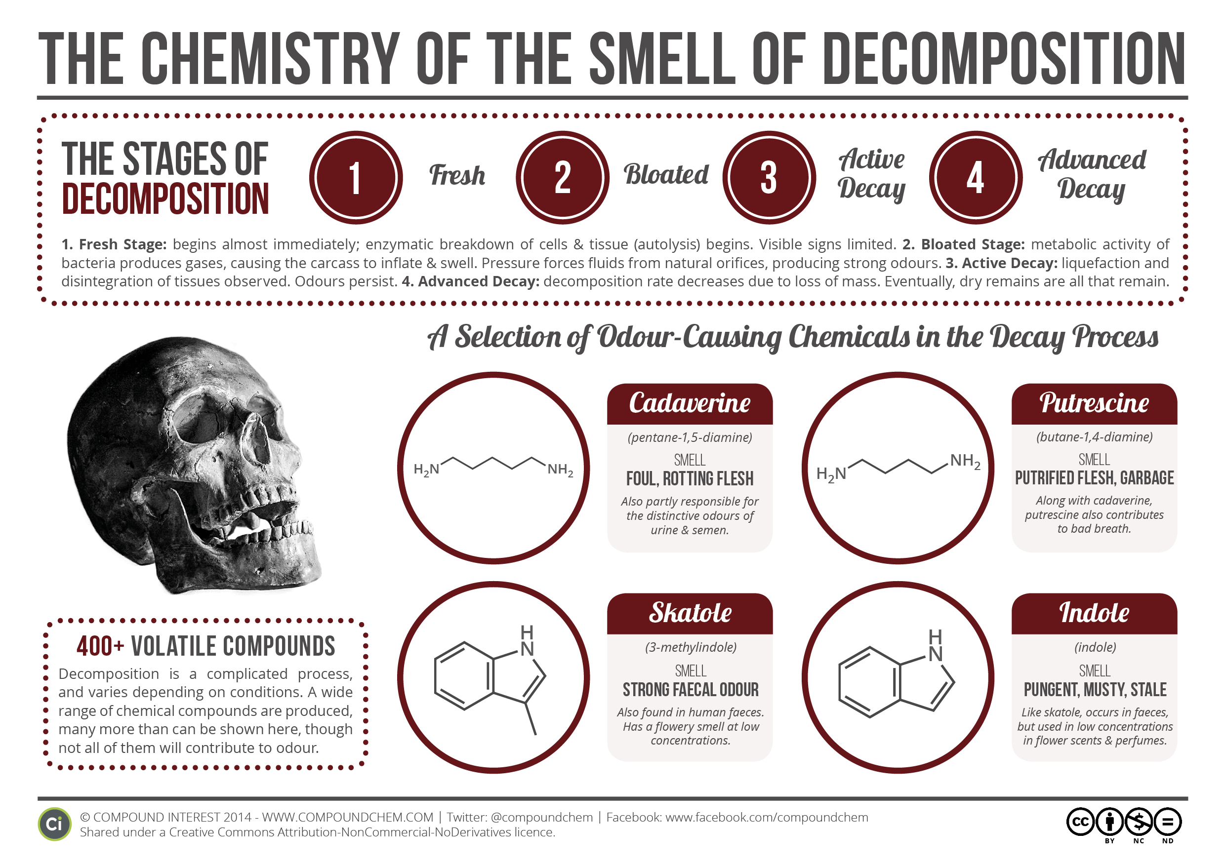 Chemistry-of-Decomposition (1)